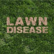 the words lawn disease imprint in the grass