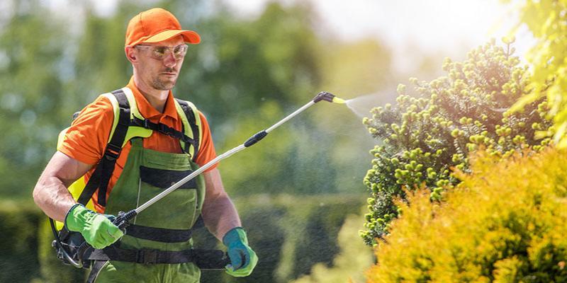 Man spraying shrubs for pest